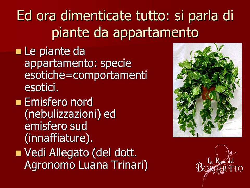 Ed ora dimenticate tutto: si parla di piante da appartamento