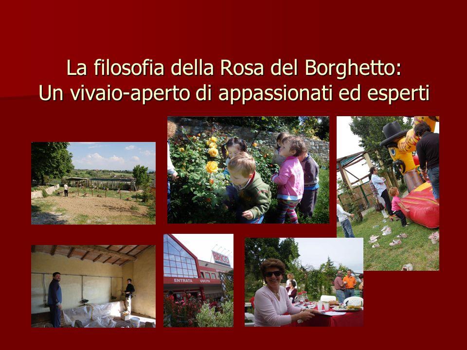 La filosofia della Rosa del Borghetto: Un vivaio-aperto di appassionati ed esperti