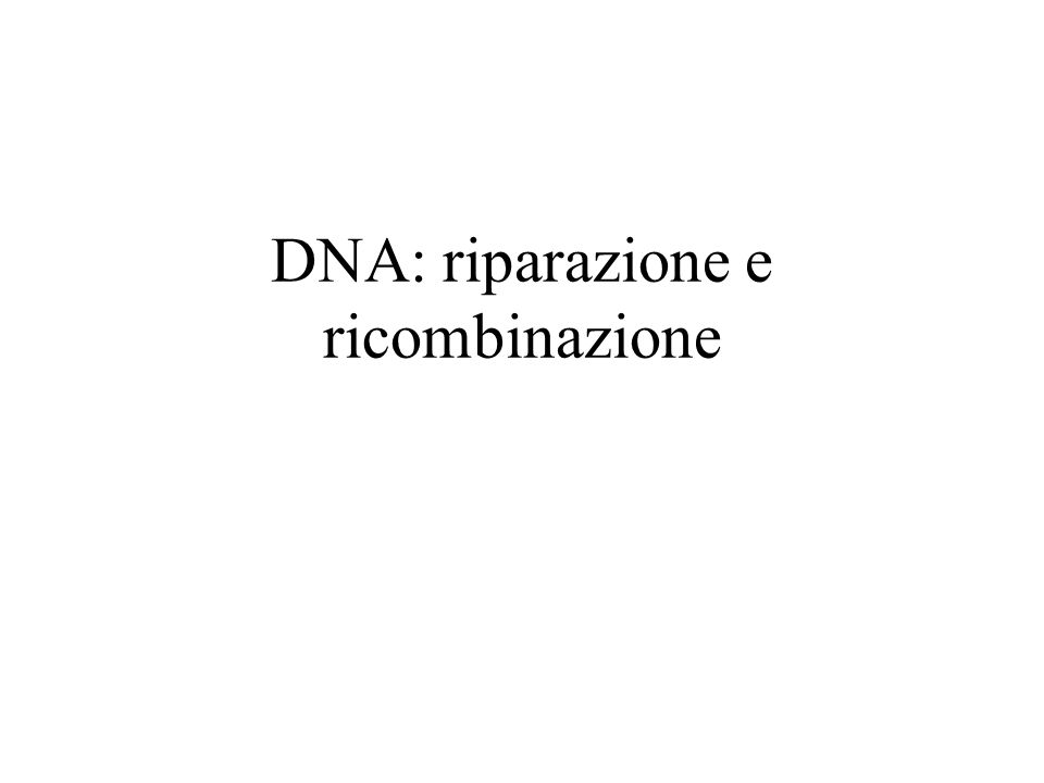 DNA: riparazione e ricombinazione