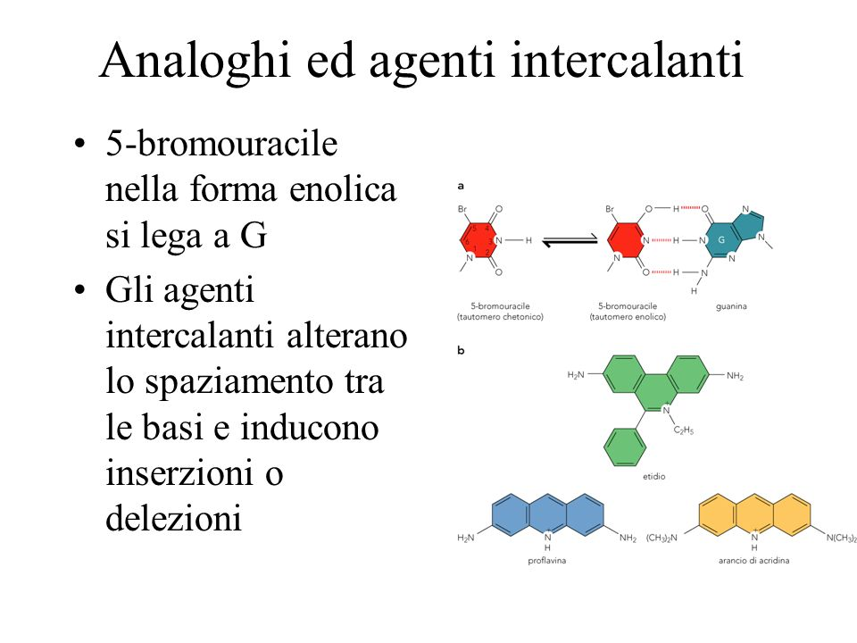 Analoghi ed agenti intercalanti