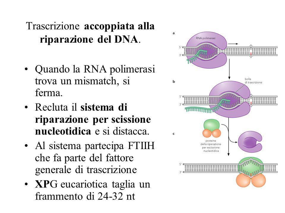 Trascrizione accoppiata alla riparazione del DNA.