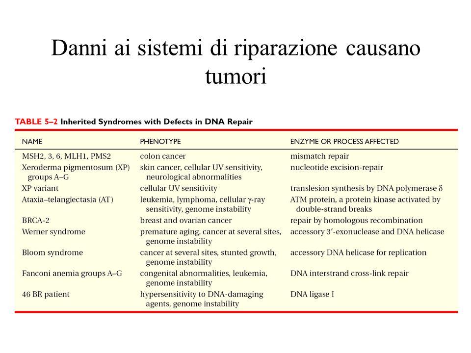 Danni ai sistemi di riparazione causano tumori