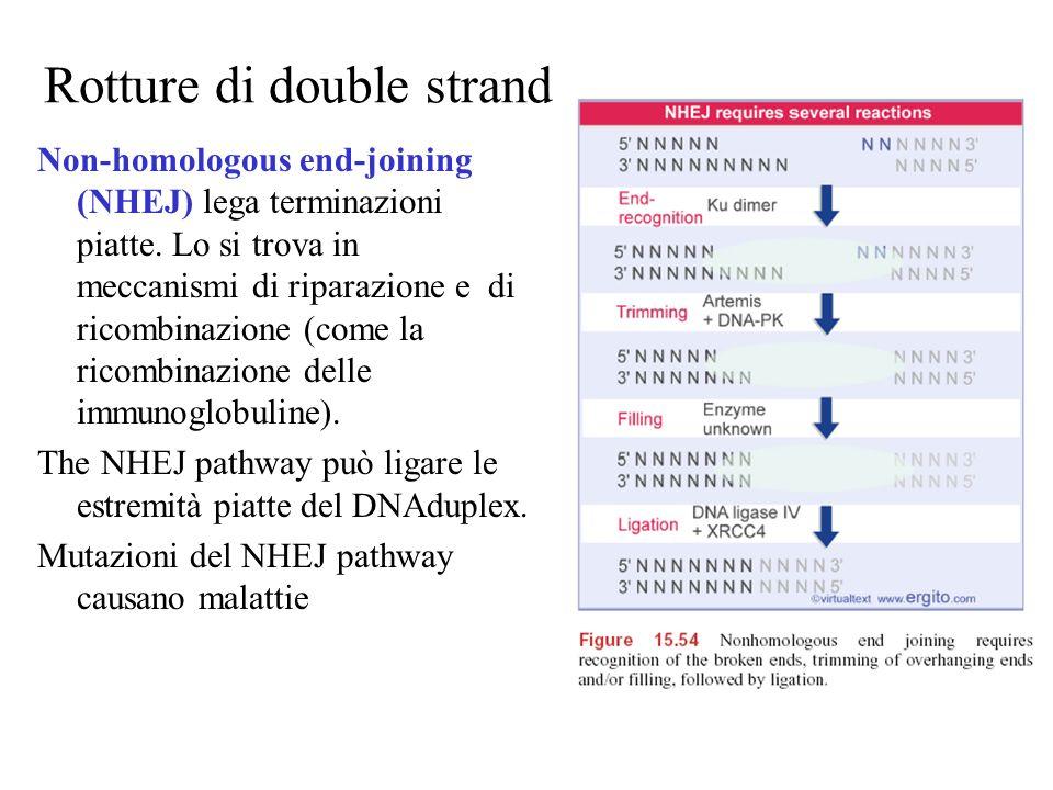 Rotture di double strand