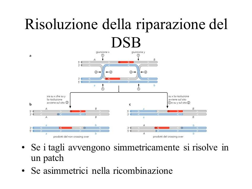 Risoluzione della riparazione del DSB