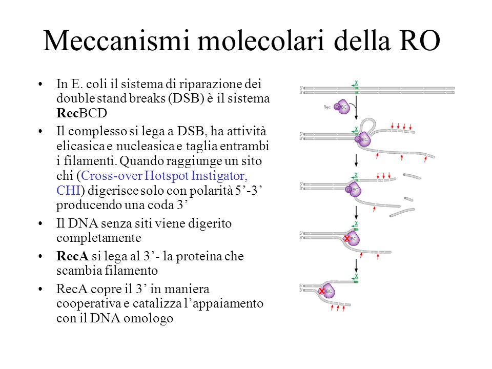 Meccanismi molecolari della RO