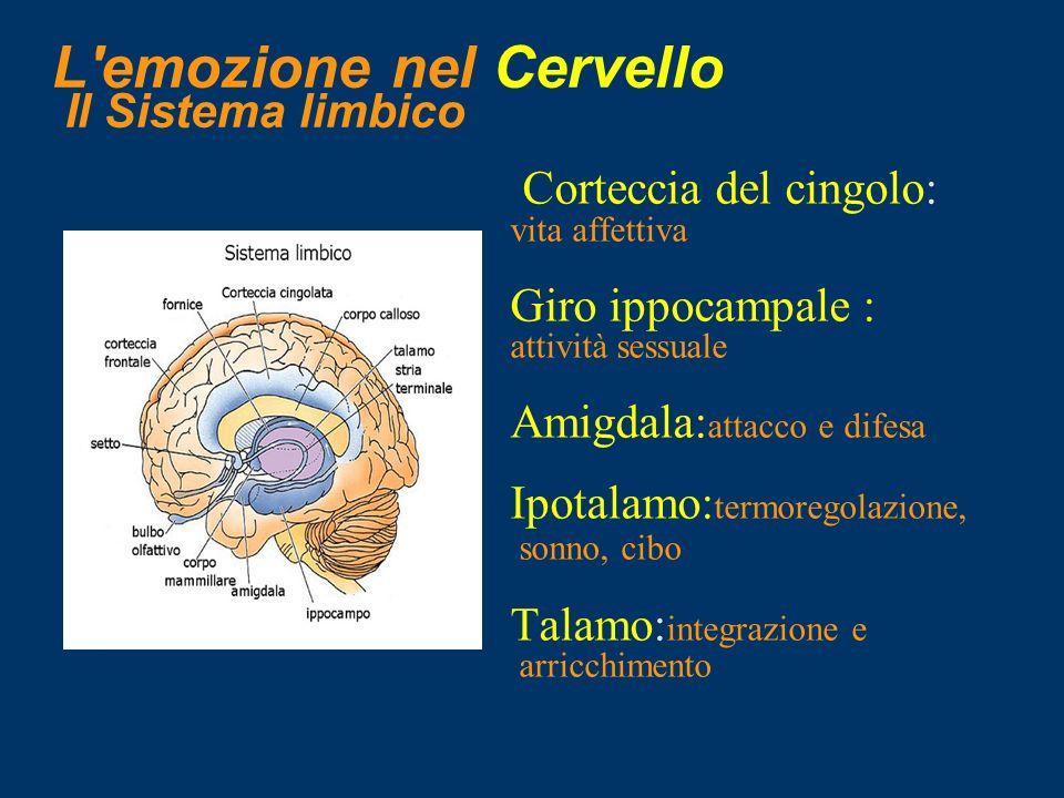 L emozione nel Cervello Il Sistema limbico