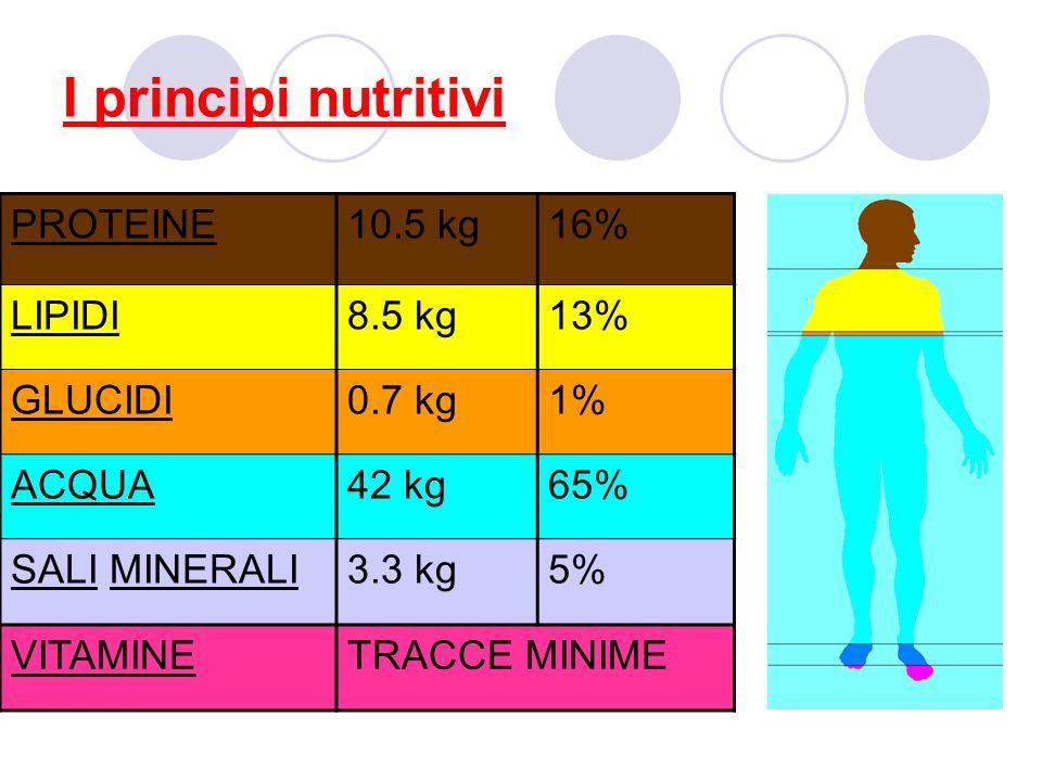 I principi nutritivi PROTEINE 10.5 kg 16% LIPIDI 8.5 kg 13% GLUCIDI