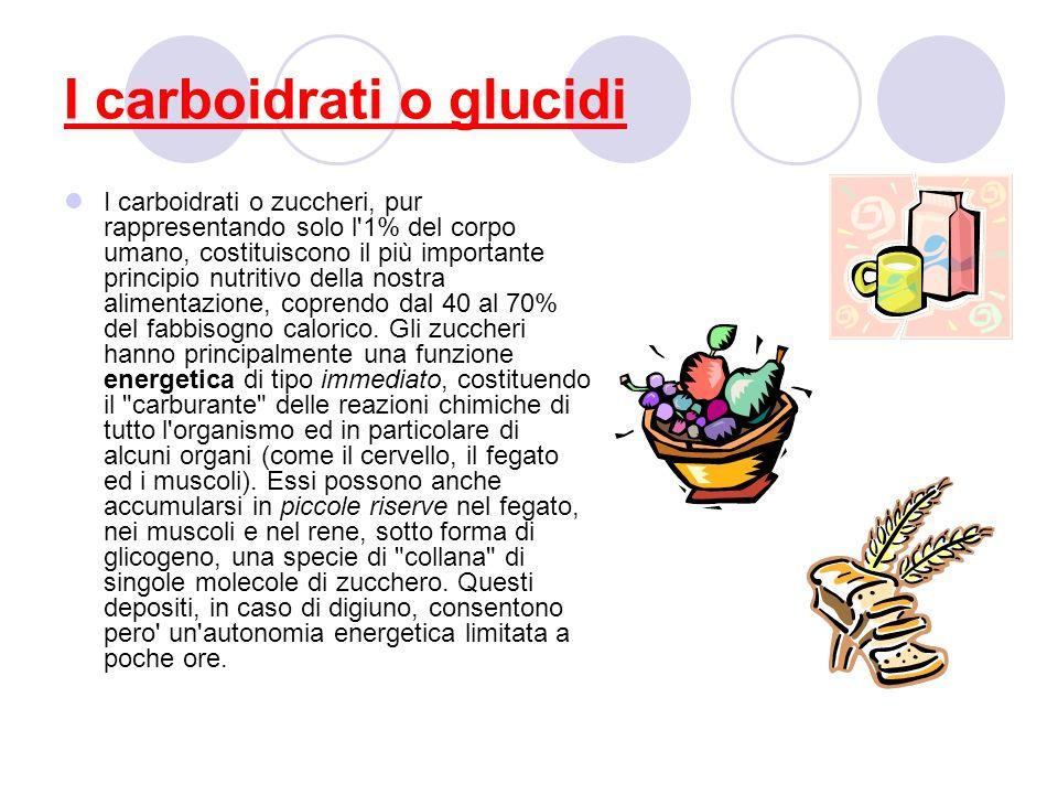 I carboidrati o glucidi