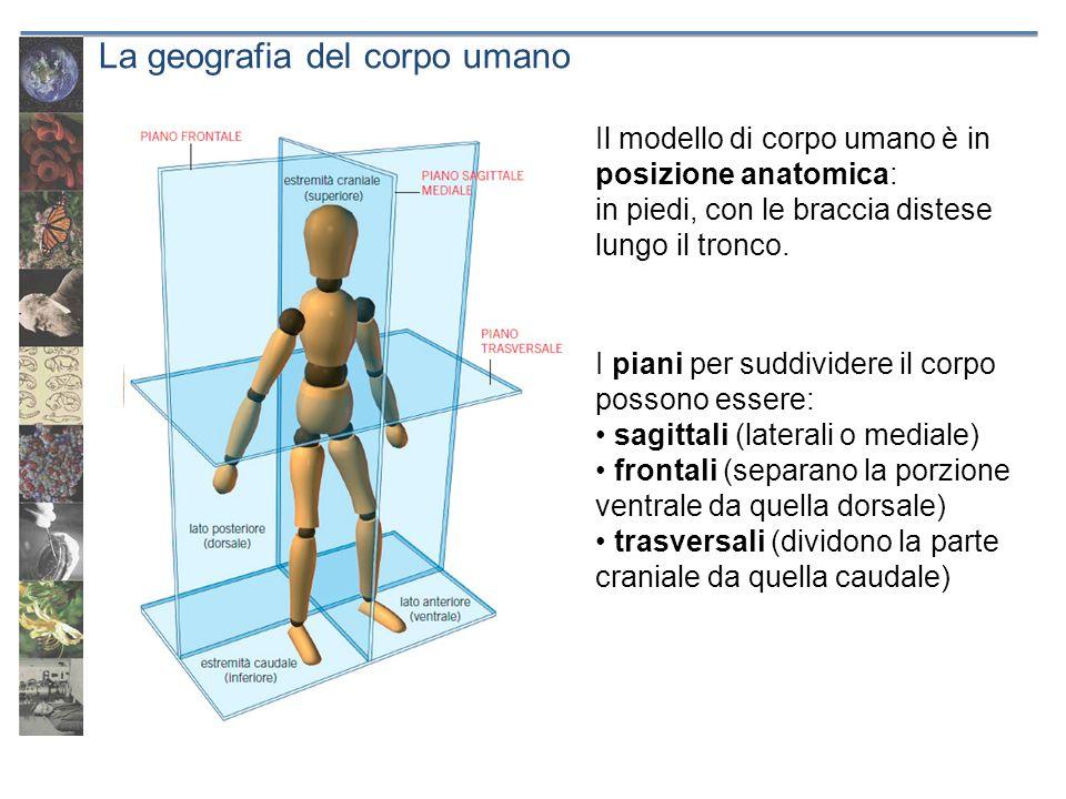 La geografia del corpo umano