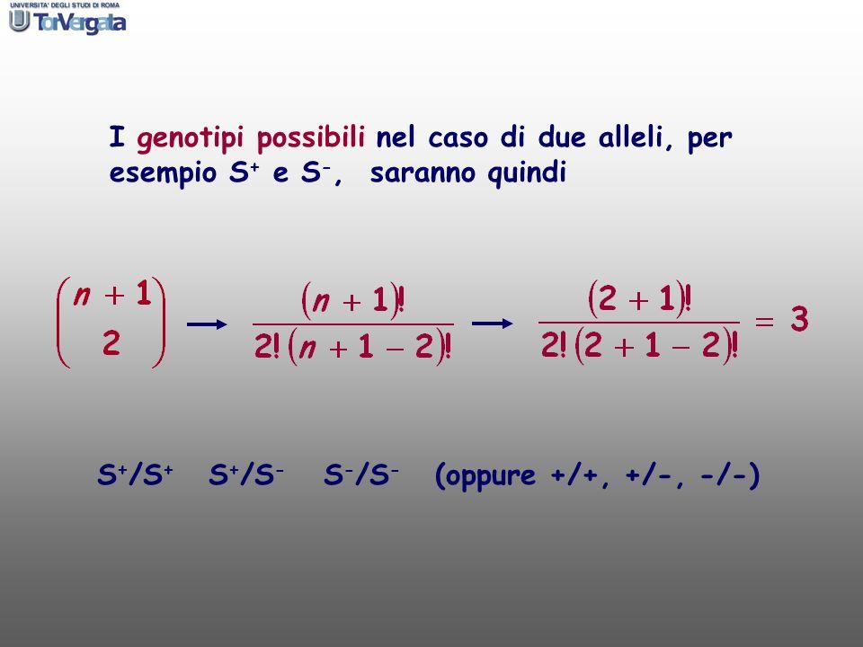 I genotipi possibili nel caso di due alleli, per esempio S+ e S-, saranno quindi