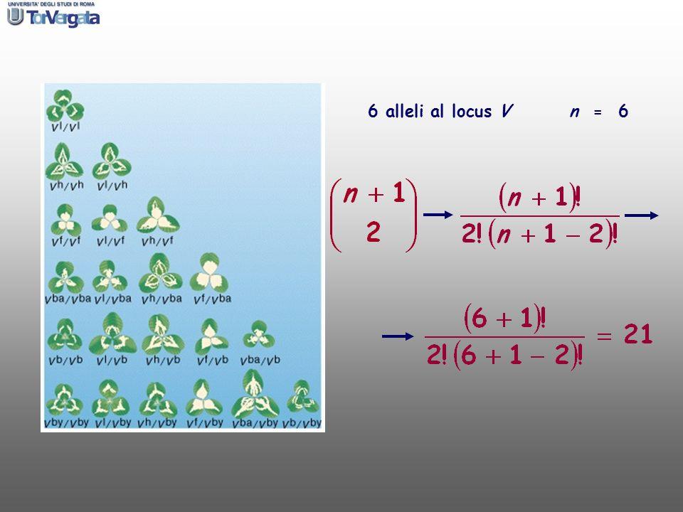 6 alleli al locus V n = 6