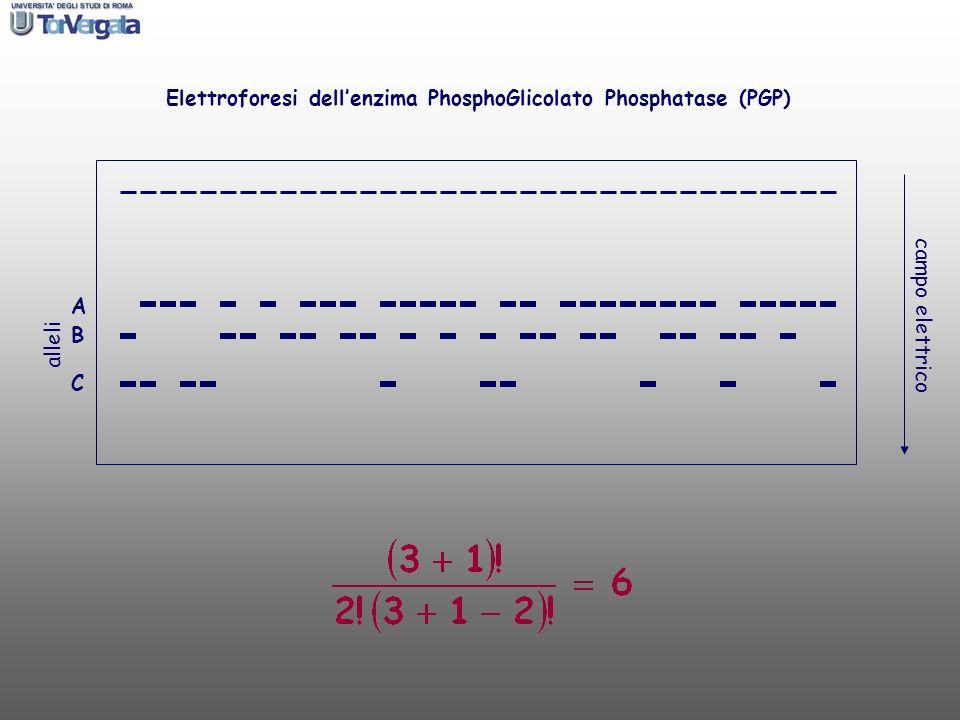 Elettroforesi dell'enzima PhosphoGlicolato Phosphatase (PGP)