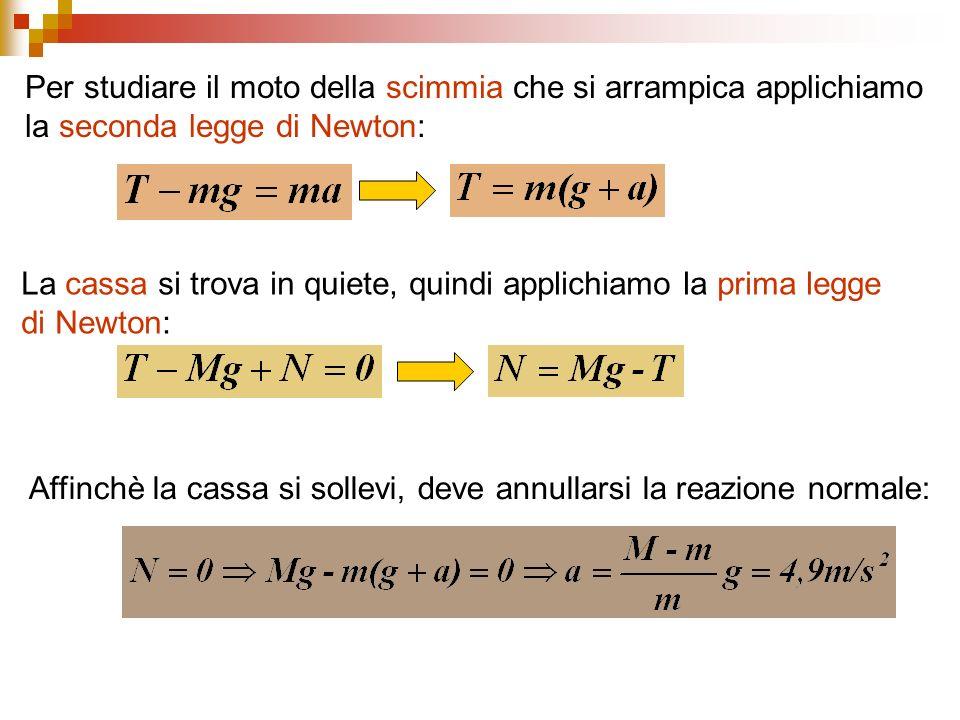 Per studiare il moto della scimmia che si arrampica applichiamo la seconda legge di Newton: