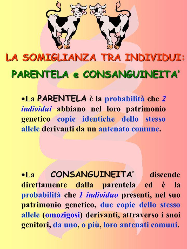 LA SOMIGLIANZA TRA INDIVIDUI: PARENTELA e CONSANGUINEITA'