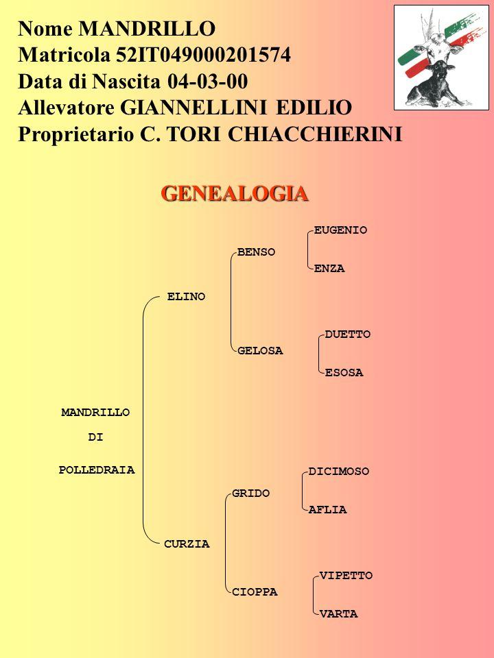 Allevatore GIANNELLINI EDILIO Proprietario C. TORI CHIACCHIERINI
