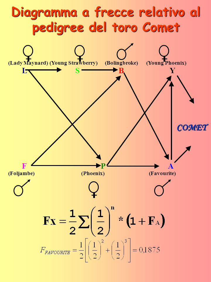 Diagramma a frecce relativo al pedigree del toro Comet