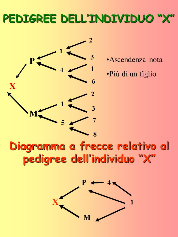 PEDIGREE DELL'INDIVIDUO X