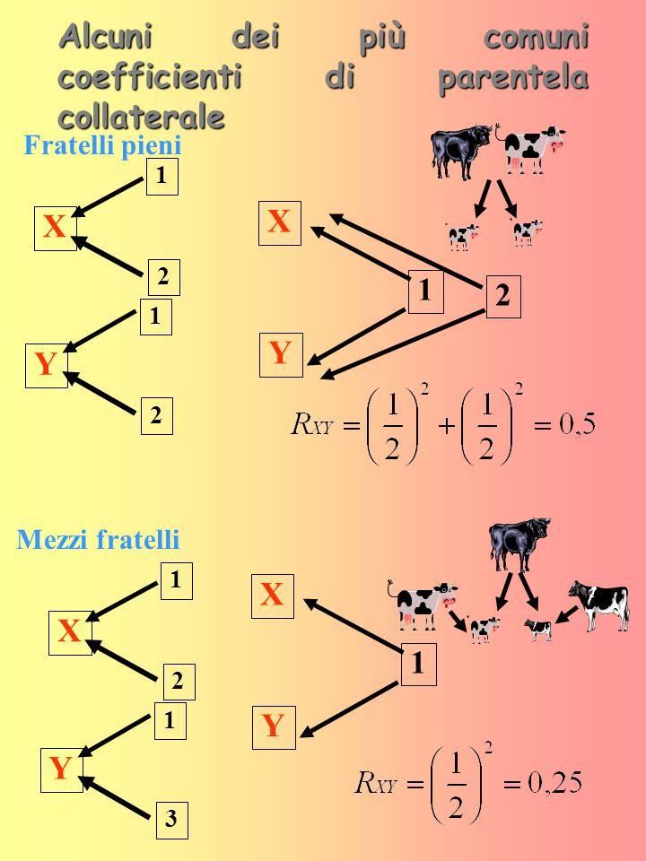 Alcuni dei più comuni coefficienti di parentela collaterale