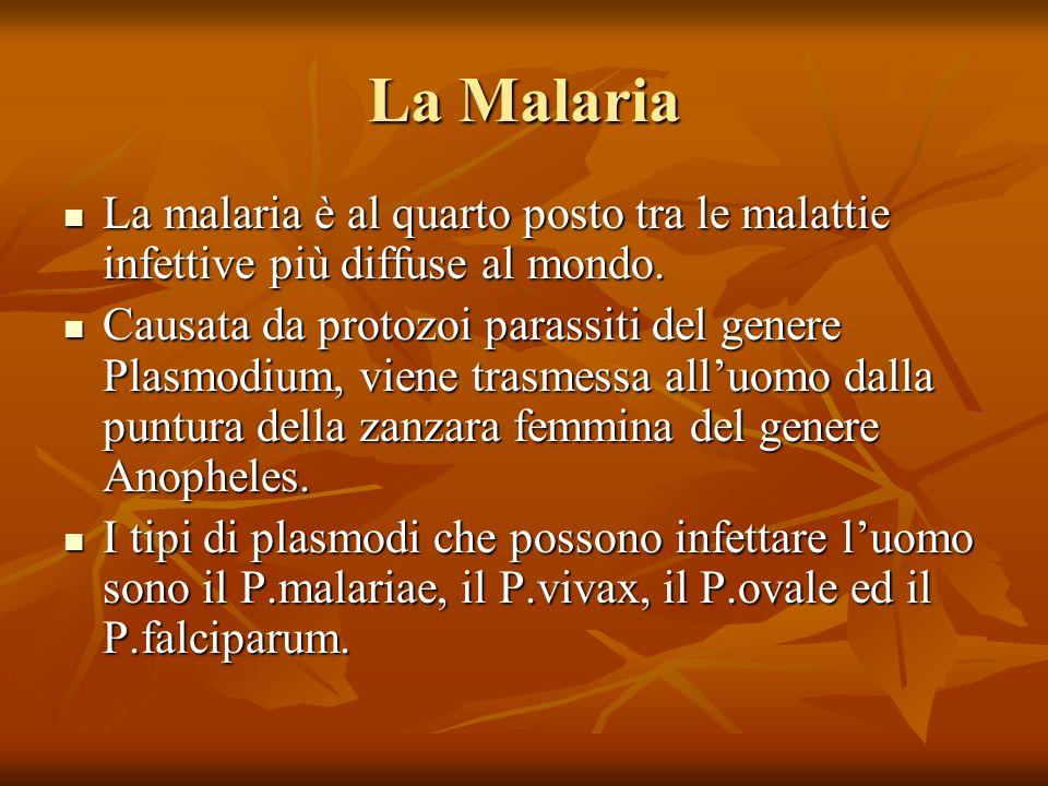 La Malaria La malaria è al quarto posto tra le malattie infettive più diffuse al mondo.