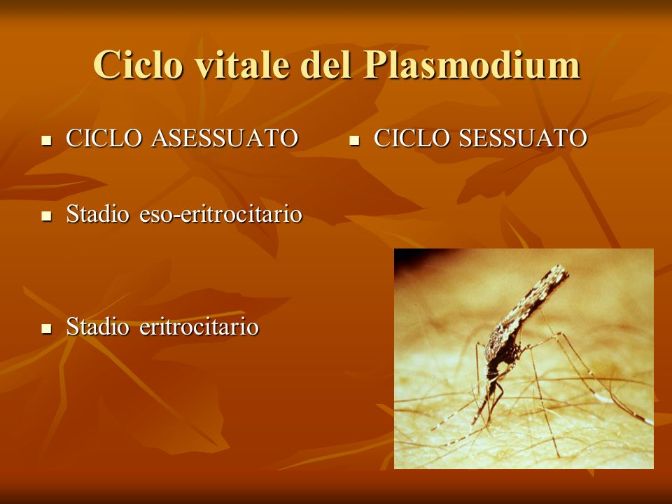 Ciclo vitale del Plasmodium