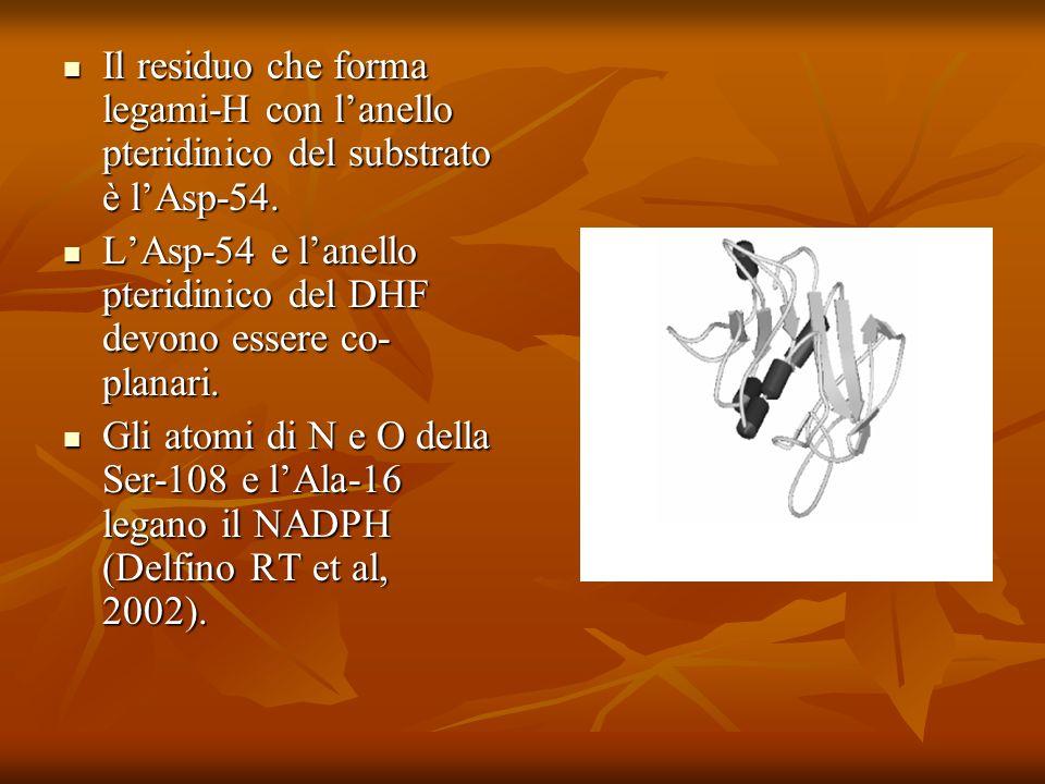 Il residuo che forma legami-H con l'anello pteridinico del substrato è l'Asp-54.