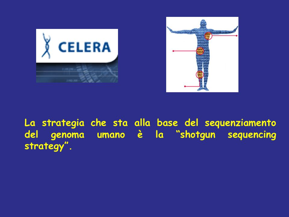 La strategia che sta alla base del sequenziamento del genoma umano è la shotgun sequencing strategy .