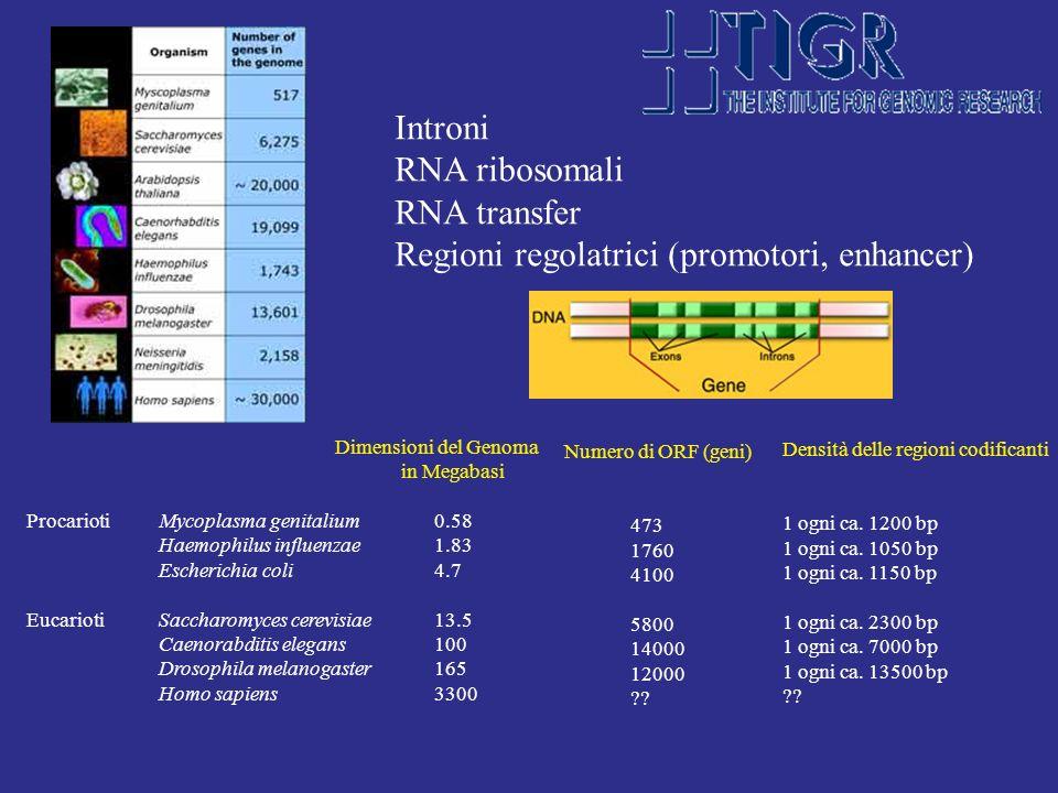 Regioni regolatrici (promotori, enhancer)