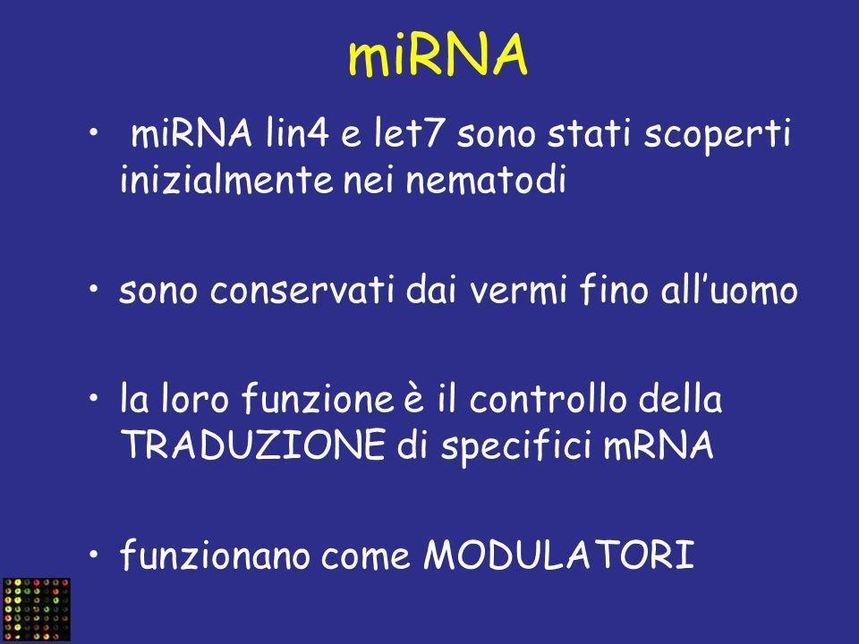 miRNA miRNA lin4 e let7 sono stati scoperti inizialmente nei nematodi