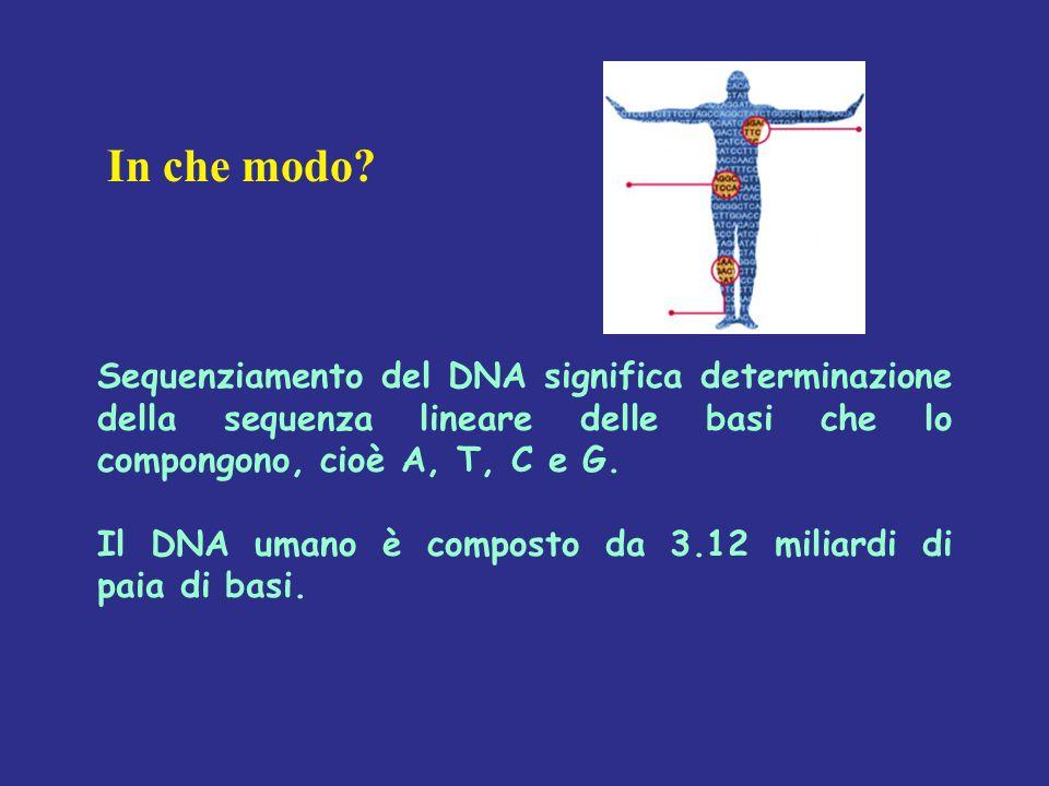 In che modo Sequenziamento del DNA significa determinazione della sequenza lineare delle basi che lo compongono, cioè A, T, C e G.