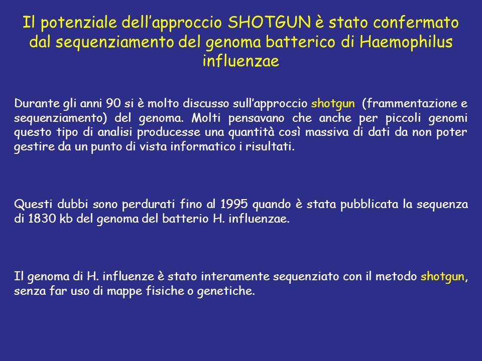Il potenziale dell'approccio SHOTGUN è stato confermato dal sequenziamento del genoma batterico di Haemophilus influenzae