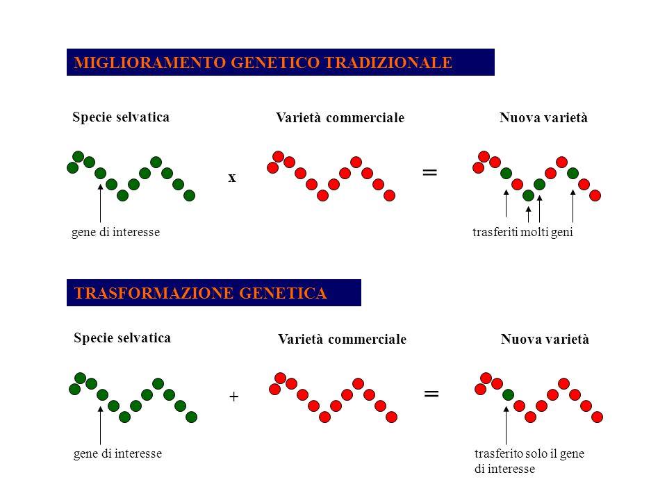 = Risorse Genetiche e Biotecnologie