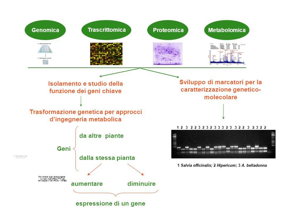Approcci molecolari Isolamento e studio della funzione dei geni chiave