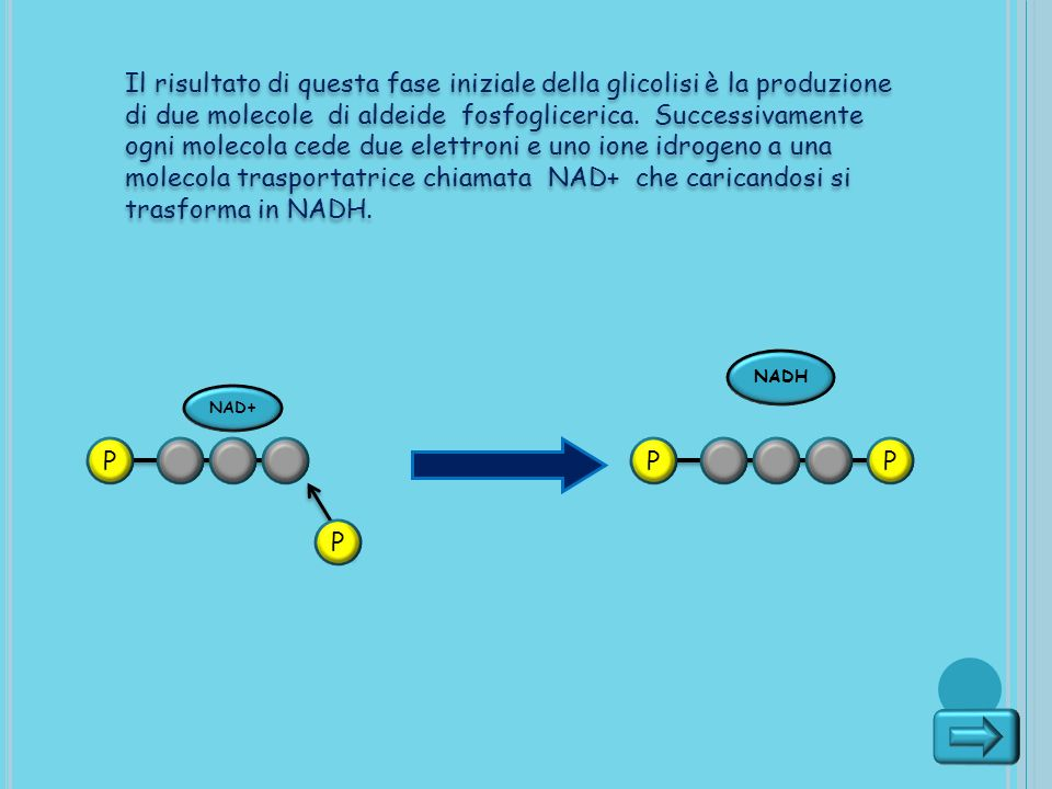 Il risultato di questa fase iniziale della glicolisi è la produzione di due molecole di aldeide fosfoglicerica. Successivamente ogni molecola cede due elettroni e uno ione idrogeno a una molecola trasportatrice chiamata NAD+ che caricandosi si trasforma in NADH.