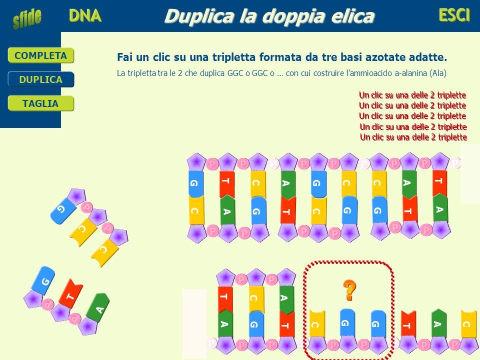 Duplica la doppia elica