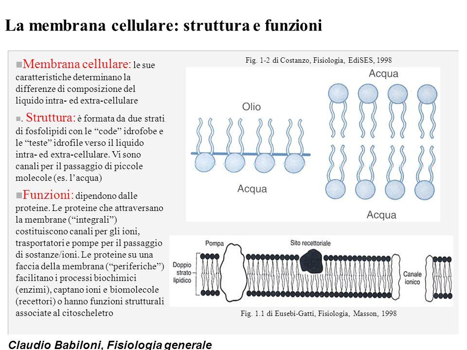 La membrana cellulare: struttura e funzioni