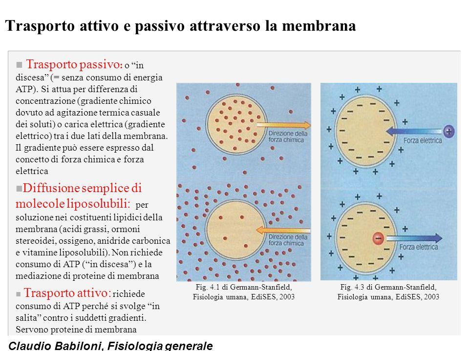 Trasporto attivo e passivo attraverso la membrana