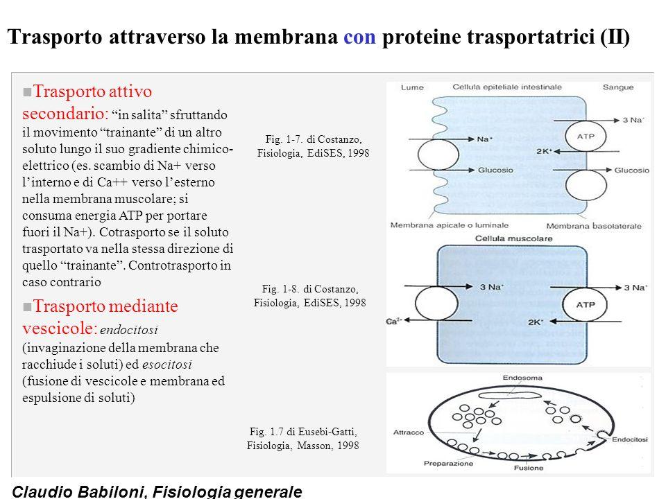 Trasporto attraverso la membrana con proteine trasportatrici (II)