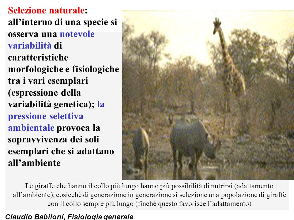 Selezione naturale: all'interno di una specie si osserva una notevole variabilità di caratteristiche morfologiche e fisiologiche tra i vari esemplari (espressione della variabilità genetica); la pressione selettiva ambientale provoca la sopravvivenza dei soli esemplari che si adattano all'ambiente