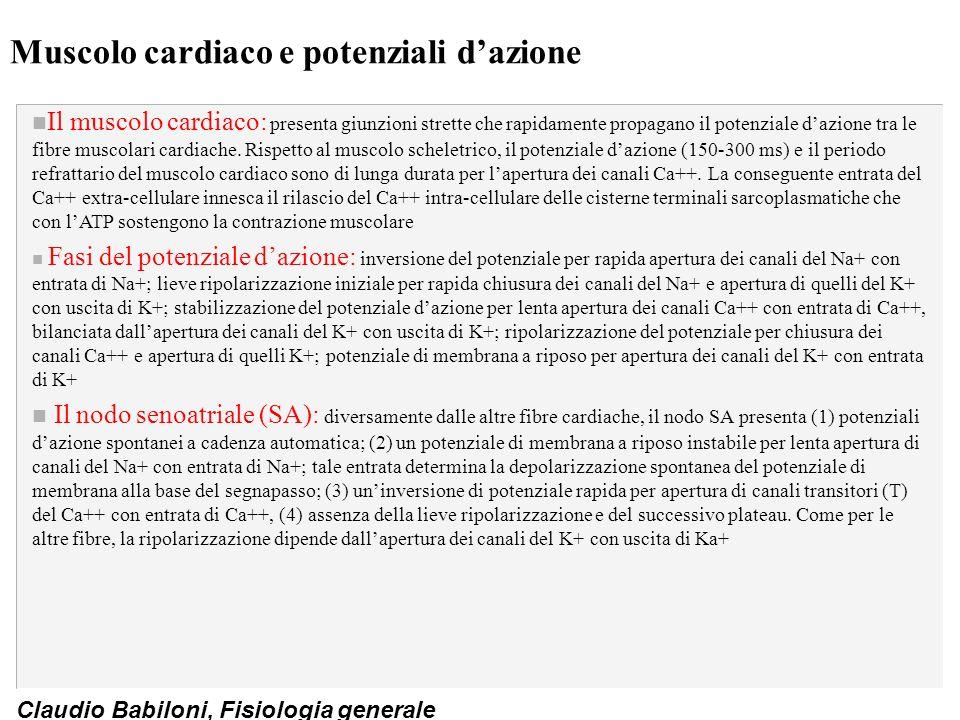 Muscolo cardiaco e potenziali d'azione