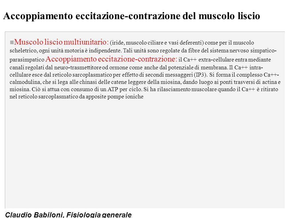 Accoppiamento eccitazione-contrazione del muscolo liscio