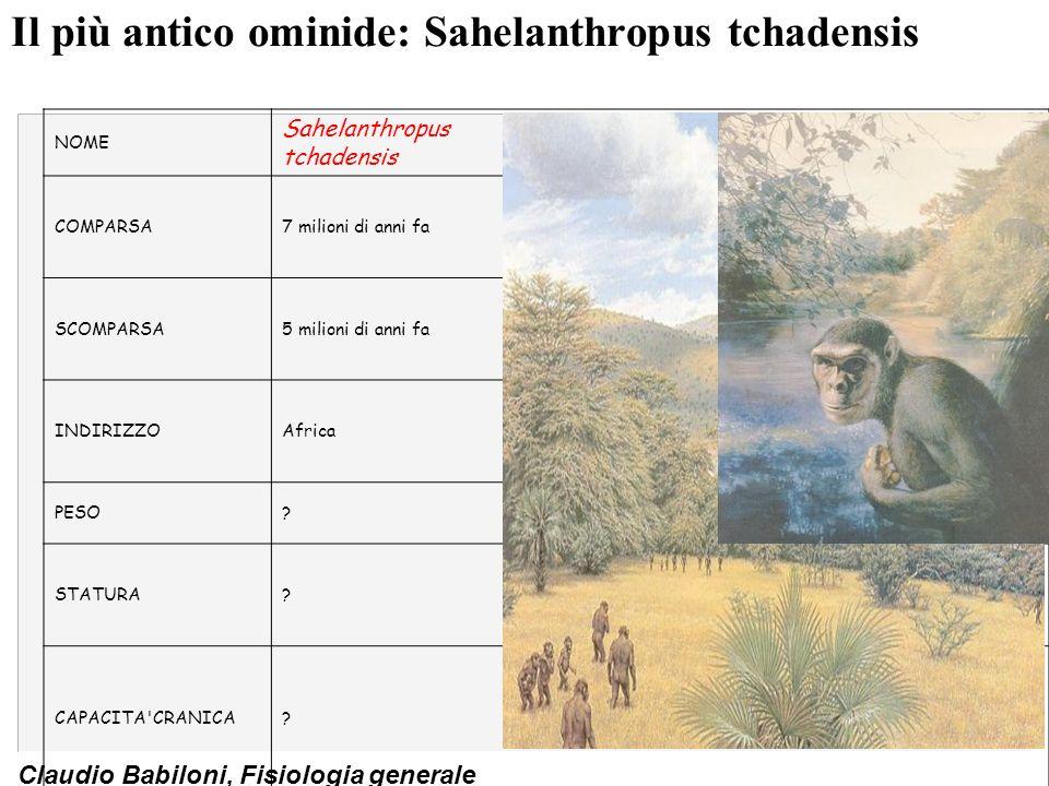 Il più antico ominide: Sahelanthropus tchadensis