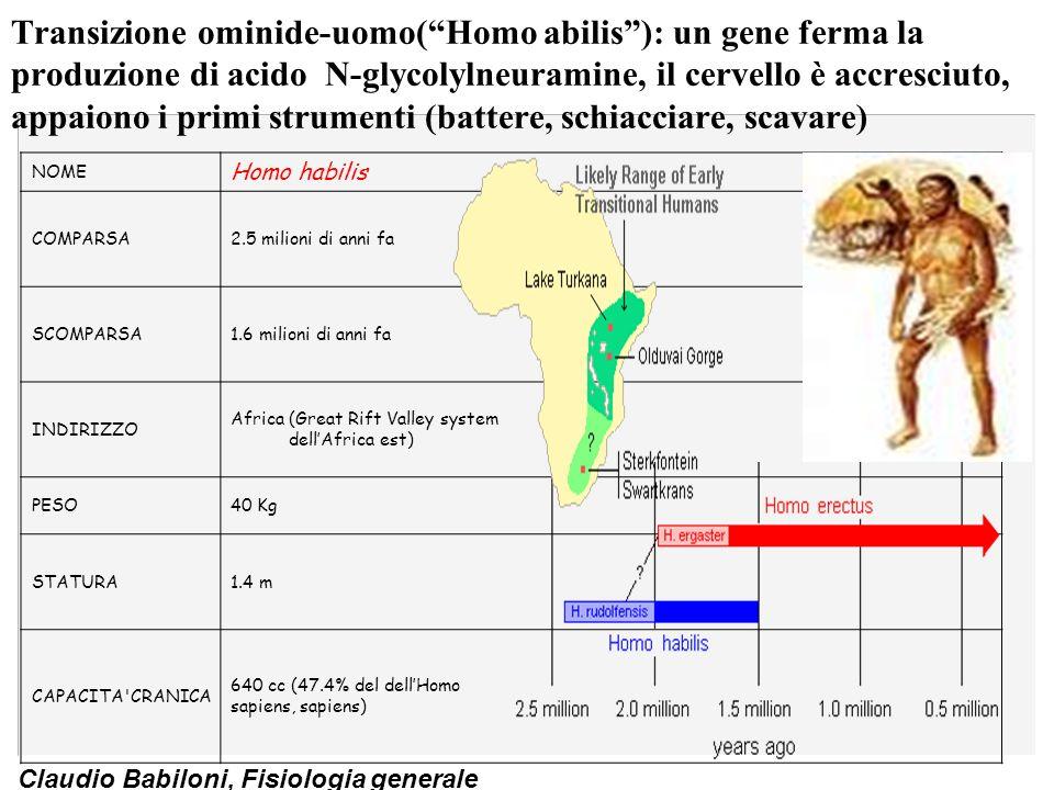 Transizione ominide-uomo( Homo abilis ): un gene ferma la produzione di acido N-glycolylneuramine, il cervello è accresciuto, appaiono i primi strumenti (battere, schiacciare, scavare)