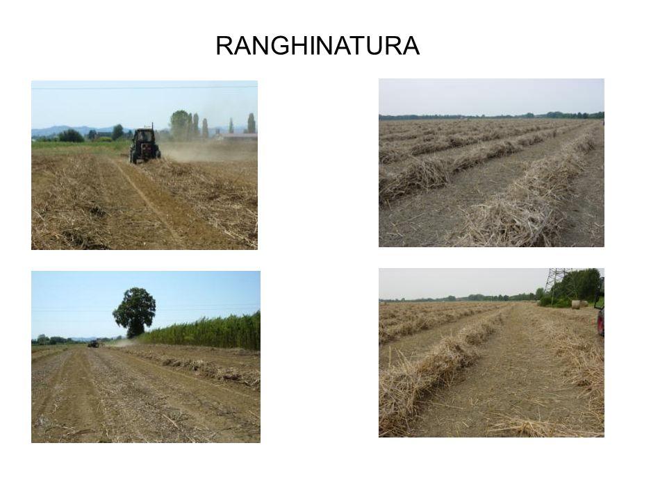 RANGHINATURA