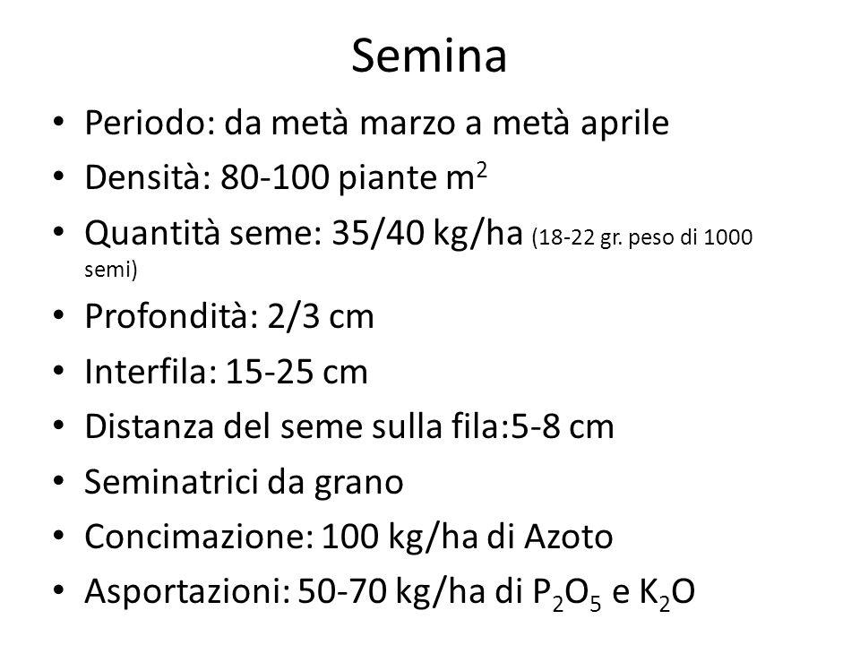 Semina Periodo: da metà marzo a metà aprile Densità: 80-100 piante m2