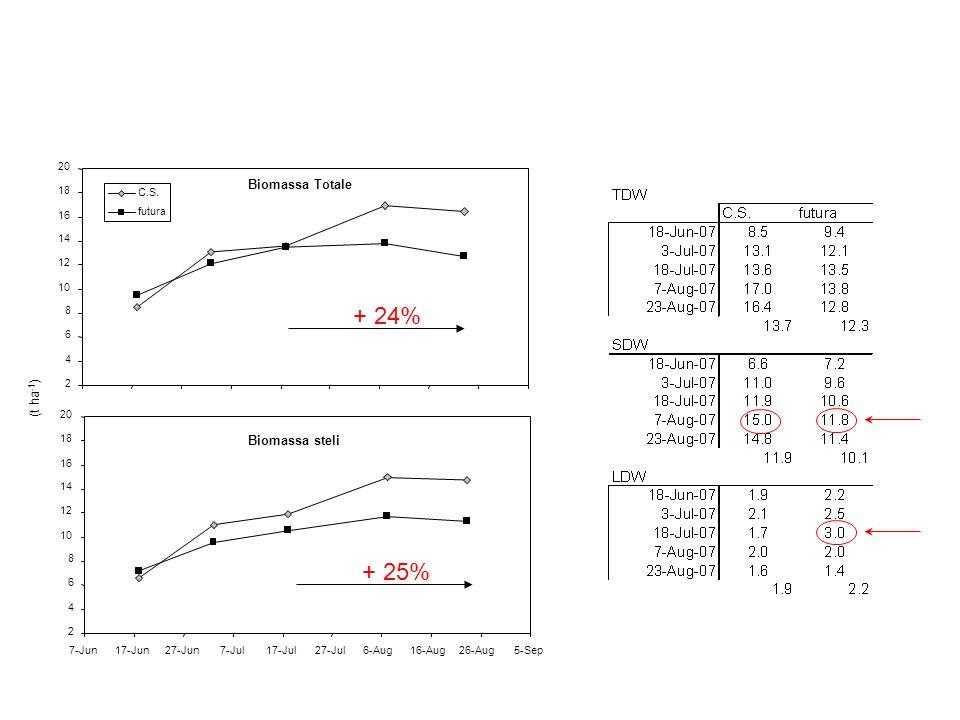 + 24% + 25% Biomassa Totale (t ha-1) Biomassa steli 2 4 6 8 10 12 14