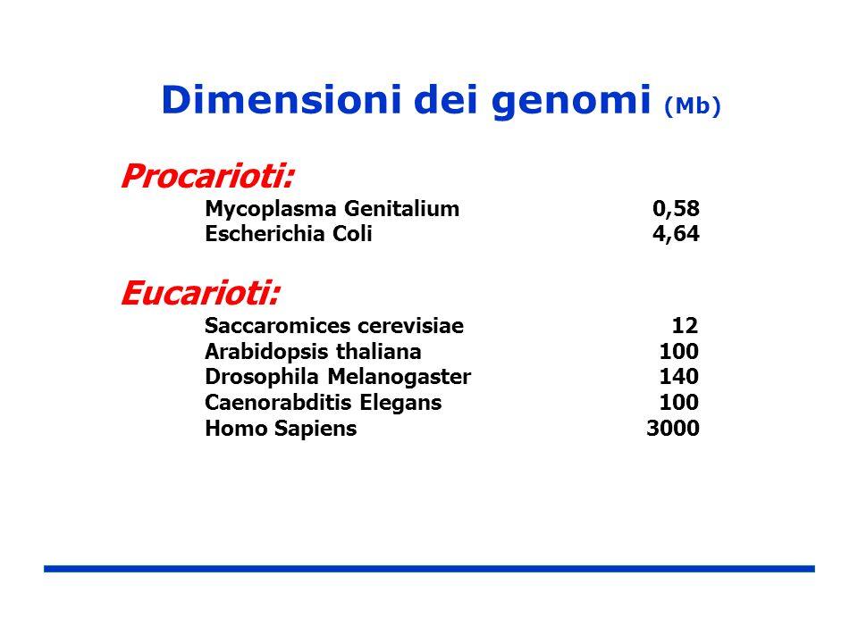 Dimensioni dei genomi (Mb)
