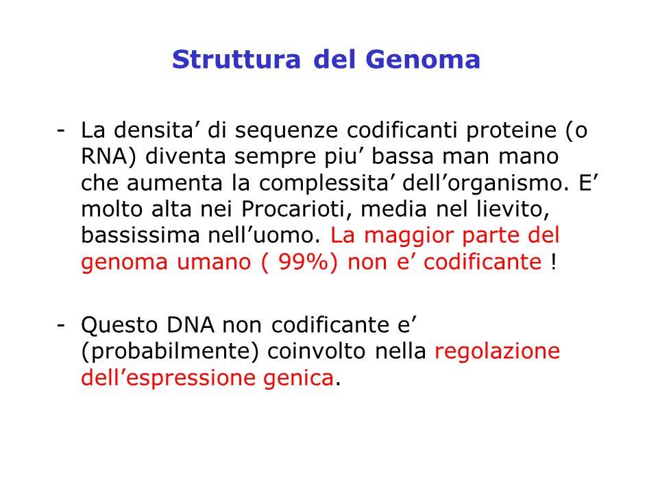 Struttura del Genoma