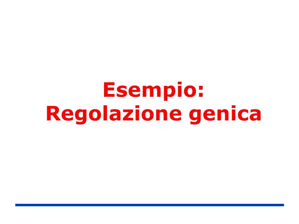 Esempio: Regolazione genica
