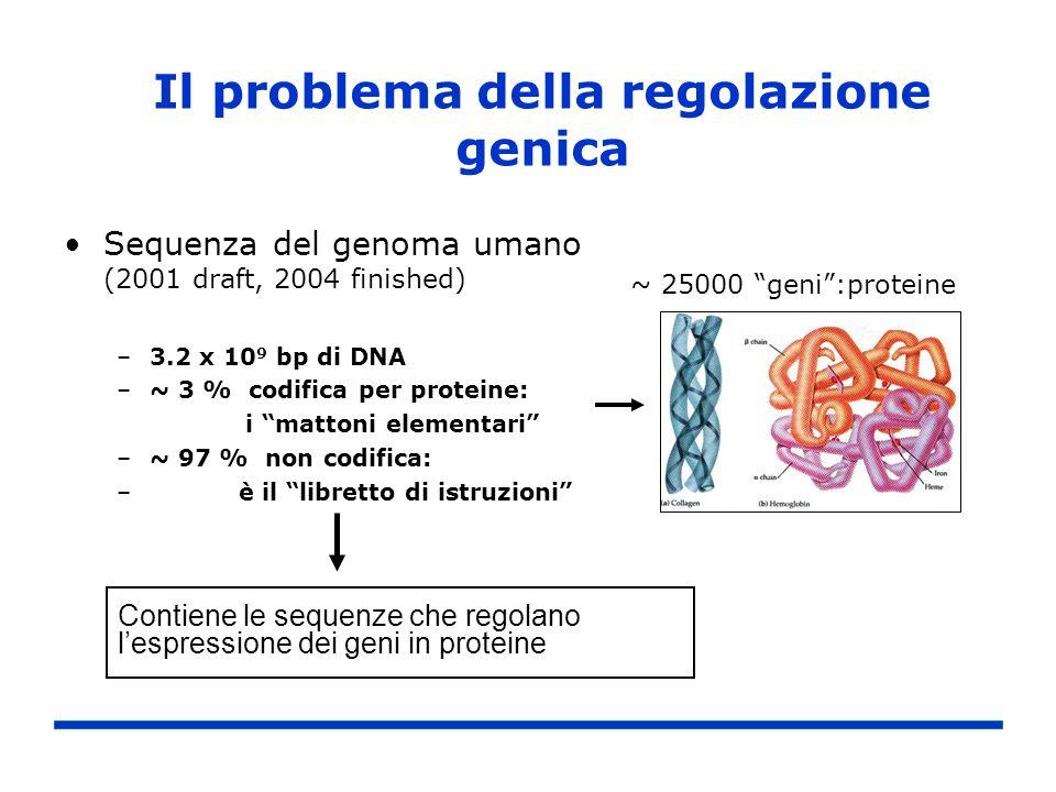 Il problema della regolazione genica
