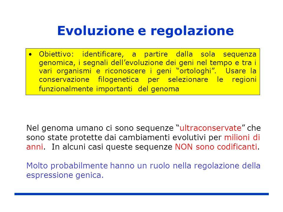 Evoluzione e regolazione